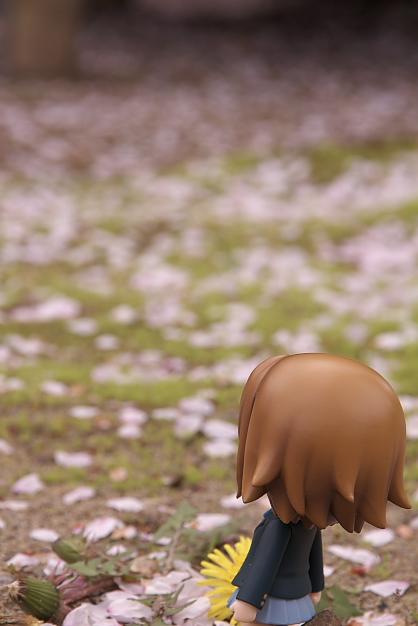散り行く桜をきっと惜しんでないりっちゃん